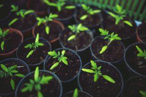 Meer Groen kinderkamp PASEN – Ola Primavera Vol 2 @ Dodoenstuin Schilde | Schilde | Vlaanderen | België