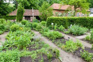 Workshop kruiden kweken, kruidentuin aanleggen @ Dodoenstuin park Schilde